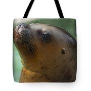 Sea Lion Up Close. Tote Bag