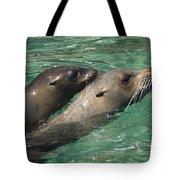 Sea Lions Tote Bag