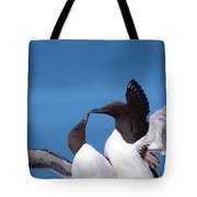 Seabird Love Tote Bag