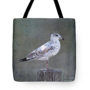 Seagull Tote Bag by Betty LaRue