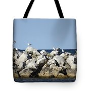 Seaguls On Boulders In Lake Erie Tote Bag
