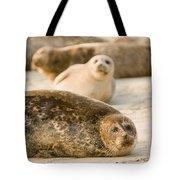 Seal 3 Tote Bag