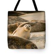 Seal 4 Tote Bag