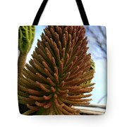 Seed Cone  Tote Bag by Aidan Moran