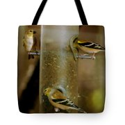 Seed Eating Song Birds Tote Bag