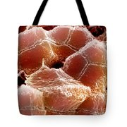 Sem Of Liver Tote Bag by Science Source
