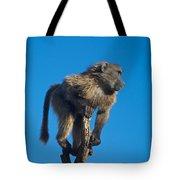 Sentry Baboon Namibia Tote Bag