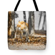 Shaded Grazing Tote Bag