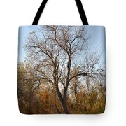 Shadow Cliff Tree Tote Bag