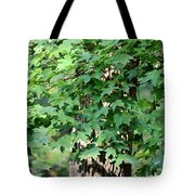 Shadows Of The Sweet Gum Tote Bag