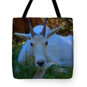 Shady Goat Tote Bag