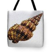 She Sells Seashells . . . Tote Bag