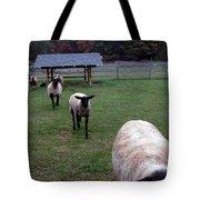 Sheep Feed Time Tote Bag