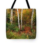 Shelburne Birches Tote Bag