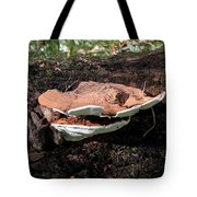 Shelf Mushrooms Tote Bag