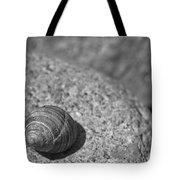 Shells IIi Tote Bag by David Rucker