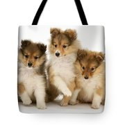 Sheltie Puppies Tote Bag by Jane Burton