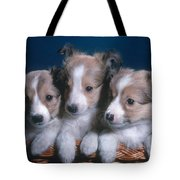 Sheltie Puppies Tote Bag by Photo Researchers, Inc.