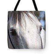 Show Horse At Mule Days Tote Bag