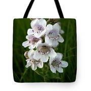 Showy Beardtongue Flower Tote Bag