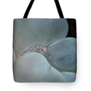 Shrimp On Bubble Coral, Indonesia Tote Bag