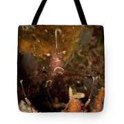 Shrimp With Legs And Claws Spread Wide Tote Bag