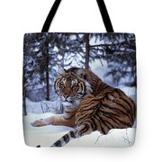 Siberian Tiger Lying On Mound Of Snow Tote Bag