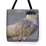 Siesta Key Royal Tern Tote Bag