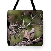 Siesta Time - Mourning Dove Tote Bag