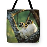 Sifaka Propithecus Sp Family Resting Tote Bag
