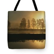 Silhouetted Trees Along The Yellowstone Tote Bag