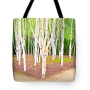 Silver Birch Trees Tote Bag