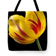Single Yellow And Red Tulip Tote Bag