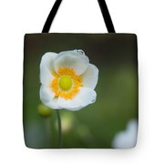 Sinle Dew Drenched Anemone Tote Bag