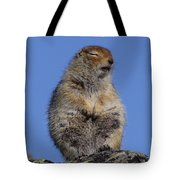 Siting In The Morning Sun Tote Bag