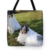 Sitting Pretty Collie Dogs Tote Bag