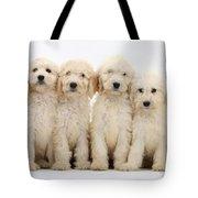 Six Labradoodle Pups Tote Bag