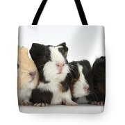 Six Young Guinea Pigs In A Row Tote Bag