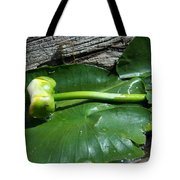 Sleeping Lily Tote Bag