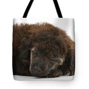 Sleeping Puppy Tote Bag