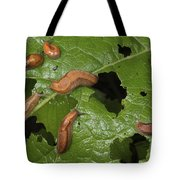 Slugs And A Snail Are Feeding On Leaves Tote Bag