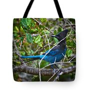 Small Blue Jay Of California Tote Bag