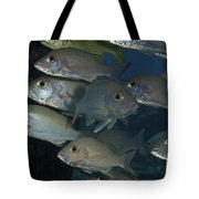 Small School Of Mahogany Schnapper Tote Bag by Terry Moore