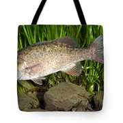 Smallmouth Bass Micropterus Dolomieu Tote Bag