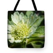 Snail And Wildflower Tote Bag
