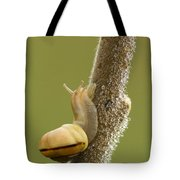 Snail In Dew Tote Bag