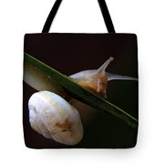 Snail Tote Bag by Stelios Kleanthous