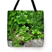 Sneaky Green Tote Bag