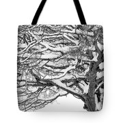 Snow Covered Tree Branches Tote Bag