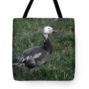 Snow Goose Blue Morph Tote Bag